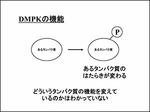 DMPKの機能